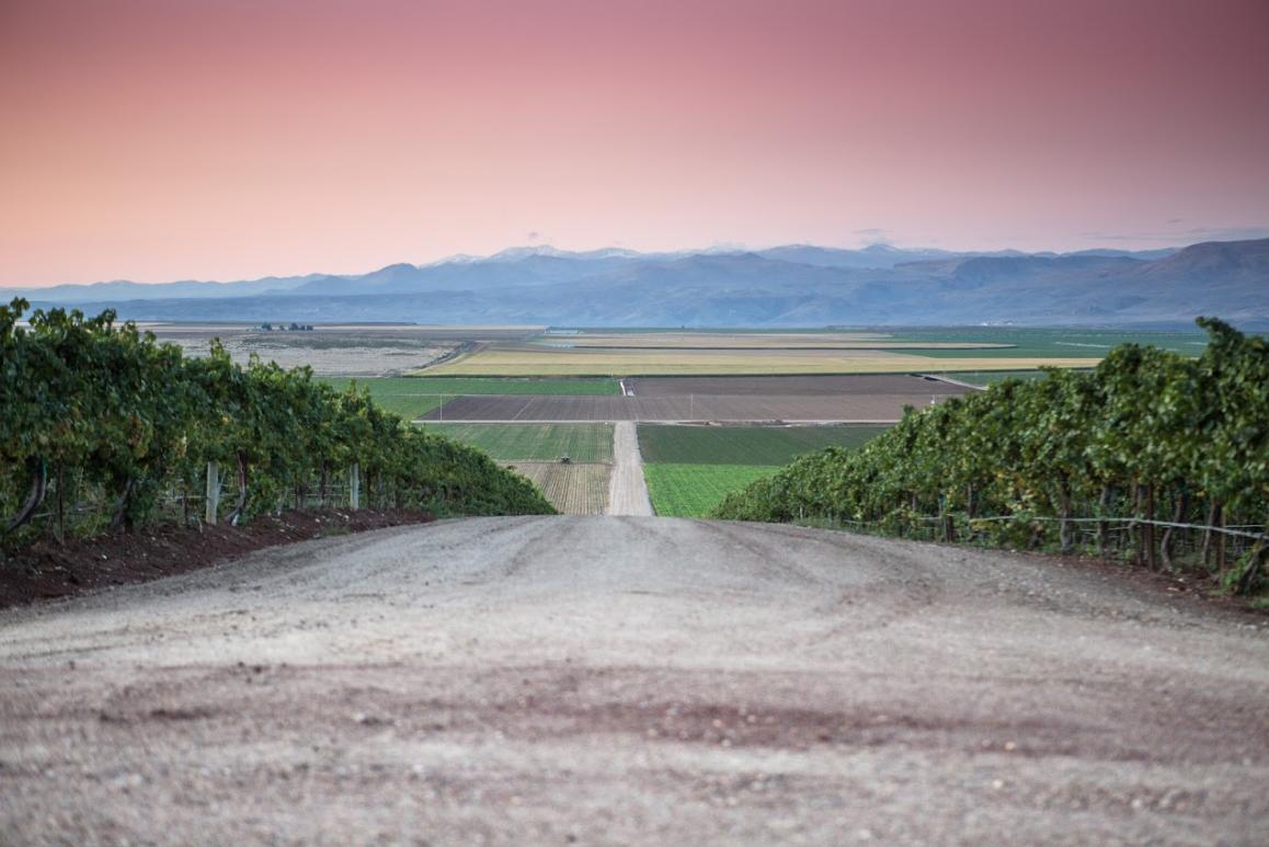 Vineyard Views In Idaho